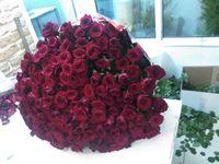 101 красная роза за 10500 руб